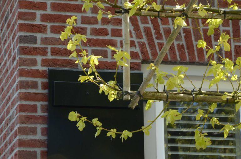 drijvers-oisterwijk-riet-baksteen-houten-gevel-spant-wolfseind-ramen-dakpannen (2)