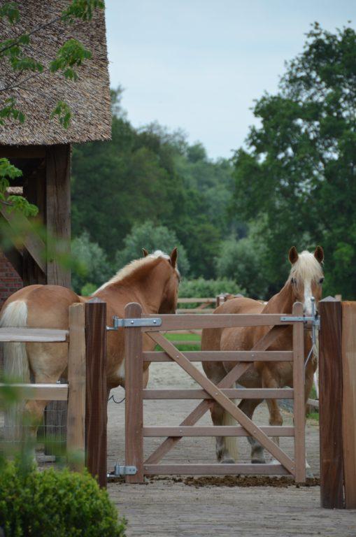 drijvers-oisterwijk-exterieur-nieuwbouw-villa-boerderij-particulier-riet-kap-hout-metselwerk-theehuis-bed-en-breakfast-stal-hout-spant (21)
