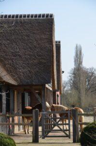 drijvers-oisterwijk-exterieur-nieuwbouw-villa-boerderij-particulier-riet-kap-hout-metselwerk-theehuis-bed-en-breakfast-stal-hout-spant (13)